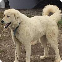 Adopt A Pet :: ABBY (cOURTESY pOST) - Upper Sandusky, OH