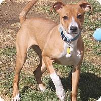 Adopt A Pet :: Sadie - North Olmsted, OH