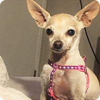 Adopt A Pet :: Lola & Jerry - Sweet Senior Pa - Kirkland, WA
