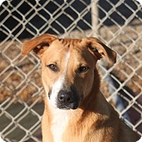 Adopt A Pet :: Tootles (New Pics) - Cranston, RI