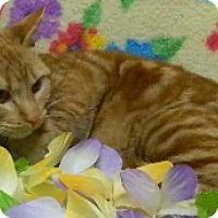 Adopt A Pet :: Phyllis - Columbus, NE