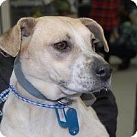 Adopt A Pet :: Sierra - Brooklyn, NY