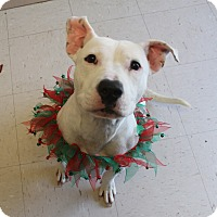 Adopt A Pet :: Marley (has been adopted) - Trenton, NJ