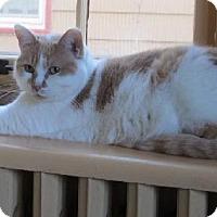 Adopt A Pet :: Libby - St. Paul, MN