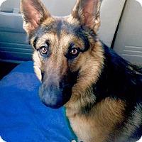 Adopt A Pet :: Truffles - Las Vegas, NV