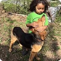 Adopt A Pet :: Sweetheart - Spring Valley, NY