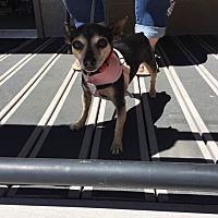 Adopt A Pet :: Tina - Grass Valley, CA