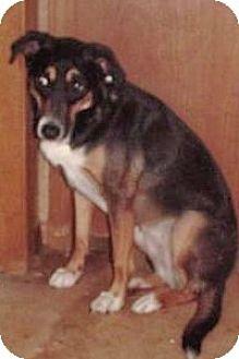 Hound (Unknown Type) Mix Dog for adoption in Claremore, Oklahoma - Daphne