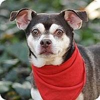 Adopt A Pet :: Wilbur - loves to play VIDEO! - Los Angeles, CA