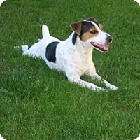 Adopt A Pet :: Rusty - Puyallup, WA