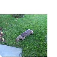 Adopt A Pet :: Dusty - Eustis, FL