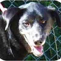 Adopt A Pet :: Cheyenne - Toronto/Etobicoke/GTA, ON