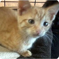 Adopt A Pet :: Ripley - Jacksonville, FL