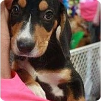 Adopt A Pet :: George - Arlington, TX