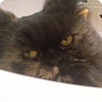 Adopt A Pet :: Cissy - Columbus, OH