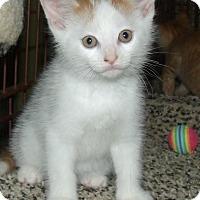 Adopt A Pet :: FLIK - Acme, PA