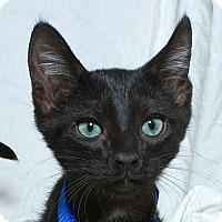 Adopt A Pet :: Eduardo V - Sacramento, CA