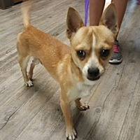Adopt A Pet :: Damian - Phoenix, AZ
