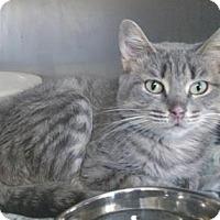 Adopt A Pet :: Kenya - Ashtabula, OH
