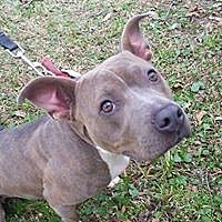 Adopt A Pet :: Xena - Rocky Point, NC