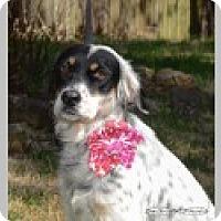 Adopt A Pet :: Jasmine - Pittsboro, NC