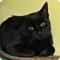 Adopt A Pet :: Danny - West Des Moines, IA