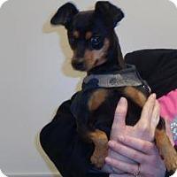 Adopt A Pet :: Snoop - Wildomar, CA