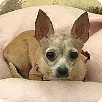 Adopt A Pet :: Zeus - Tucson, AZ
