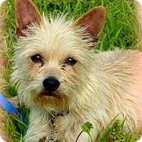 Adopt A Pet :: GeGe - Anderson, SC