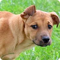 Adopt A Pet :: Janka - Glastonbury, CT