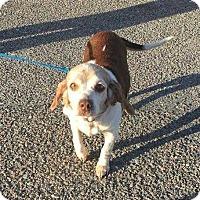 Adopt A Pet :: Betsy - Summerville, SC