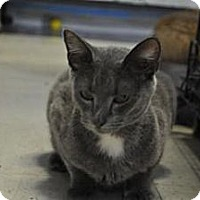 Adopt A Pet :: Roxanne - Converse, TX