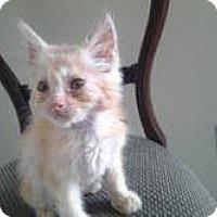 Adopt A Pet :: Tofu - Houston, TX