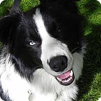 Adopt A Pet :: Ranger - Surrey, BC