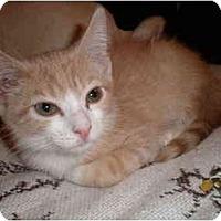 Adopt A Pet :: Finn - New York, NY