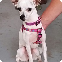 Adopt A Pet :: Luella - nashville, TN