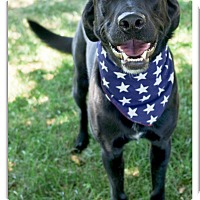 Adopt A Pet :: Kemper your side kick - Sacramento, CA