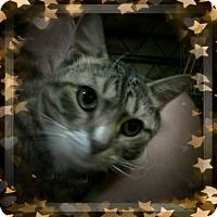 Adopt A Pet :: Mendler - Trevose, PA