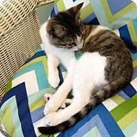 Adopt A Pet :: Theta - The Colony, TX