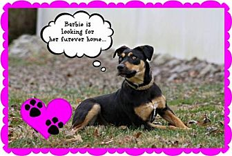 Feist Mix Dog for adoption in Marion, Kentucky - Barbie