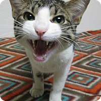 Adopt A Pet :: Kennedy - Gary, IN