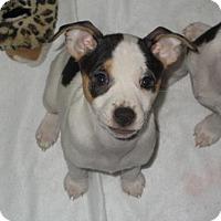 Adopt A Pet :: Peppermint - Libertyville, IL