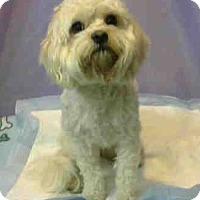 Adopt A Pet :: URGENT on 3/27 @DEVORE - San Bernardino, CA