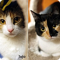 Adopt A Pet :: Tiki & Jojo - Oakville, ON