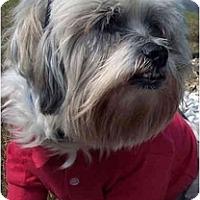 Adopt A Pet :: Cash - Mays Landing, NJ
