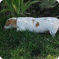 Adopt A Pet :: Lindsey & Gretl - Herriman, UT