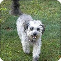 Adopt A Pet :: Crockett - Washington, NC
