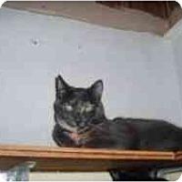 Adopt A Pet :: Star - North Boston, NY