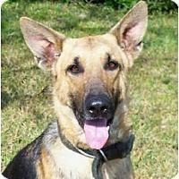 Adopt A Pet :: Trooper - Pike Road, AL