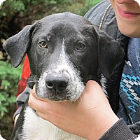 Adopt A Pet :: Moose Tracks  URGENT  REDUCED - Kittery, ME